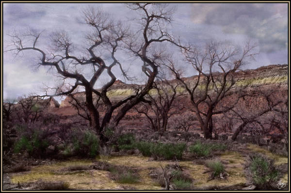 Photograph - Painted Cottonwood Mindscape by Wayne King