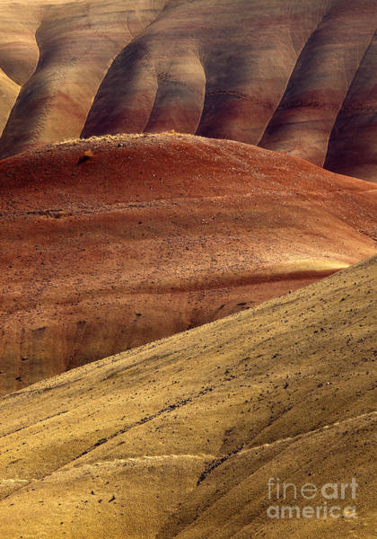 Painted Desert Photograph - Painted Curves by Mike  Dawson