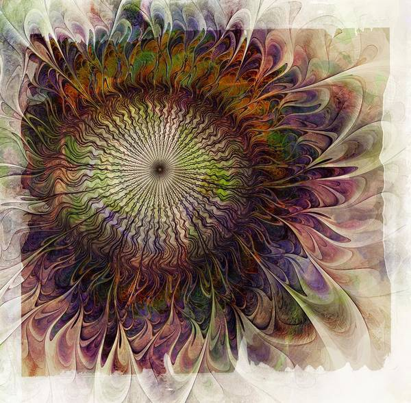 Digital Art - Painted Daisy by Amanda Moore