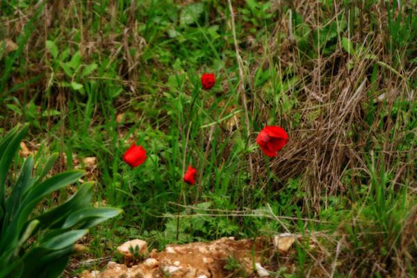 Painting - Kalanit Flower - Phototgraphic Series II by Doc Braham