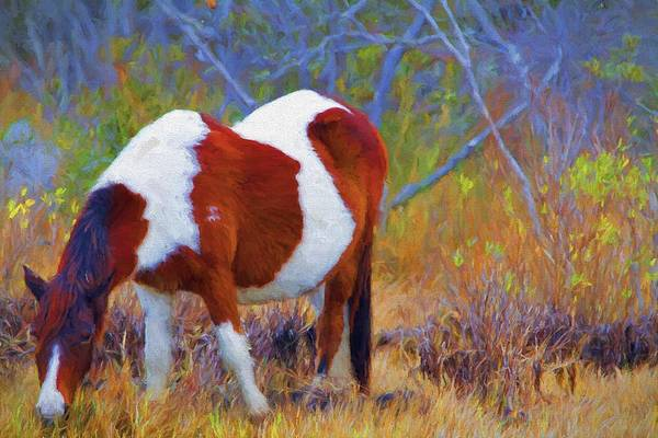 Photograph - Painted Marsh Mare by Alice Gipson