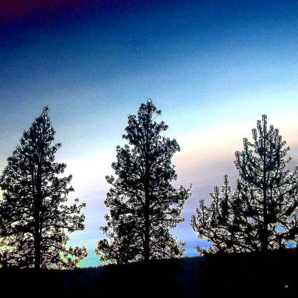 Pine Valley Digital Art - Painted Pine Tree Trio by Will Borden