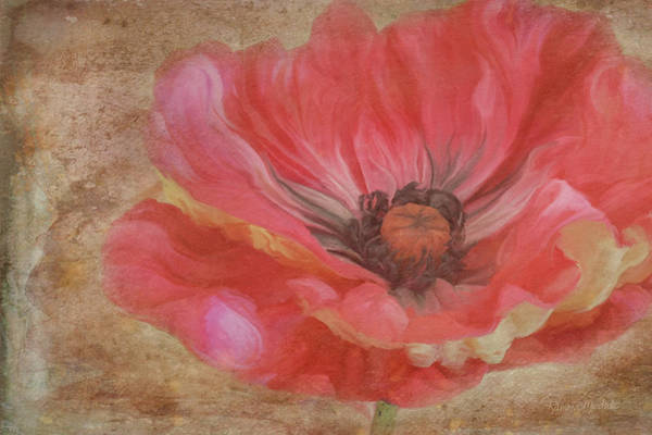 Poppie Painting - Painted Poppie by Ramona Murdock