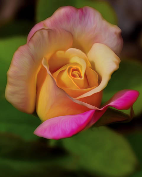 Wall Art - Photograph - Painted Rose Bud by Dave Sandt