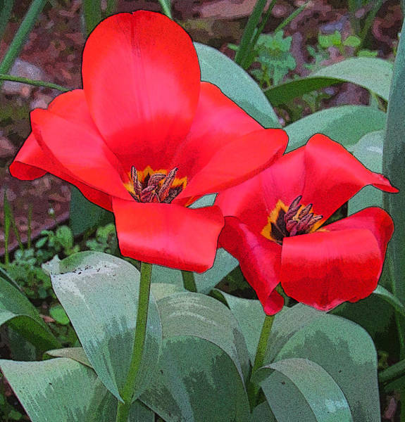 Photograph - Painted Tulips by Tony and Kristi Middleton