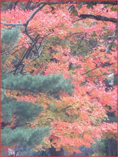 Greetingcards Photograph - Painting Autumn by Sonali Gangane