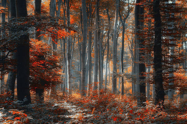 Wall Art - Photograph - Painting Forest by Ildiko Neer