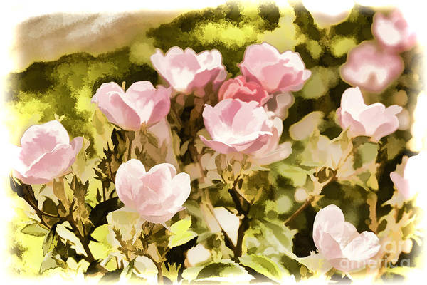 Painting - Painting Of A Pink Rose Flower In Color 3222.02 by M K Miller