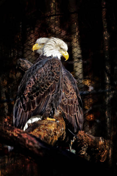 Photograph - Pair Of Eagles by Eleanor Abramson