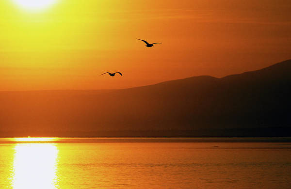 Pair Of Seagulls Flying Over Cook Inlet Art Print