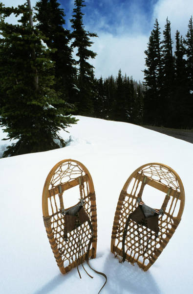Snowshoe Photograph - Pair Snowshoes Standing Upright In Snow by Vintage Images