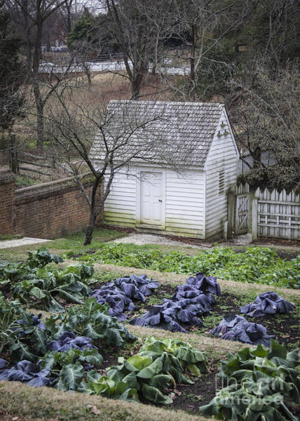 Williamsburg Photograph - Palace Kitchen Winter Garden by Teresa Mucha