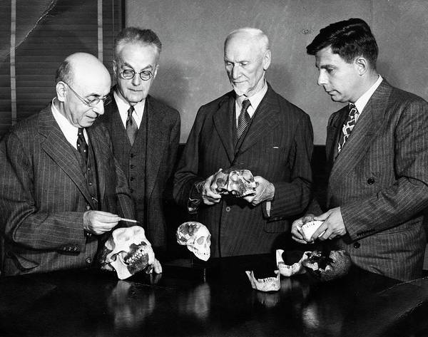 African American Museum Photograph - Palaeontologists Examining Skulls by American Philosophical Society