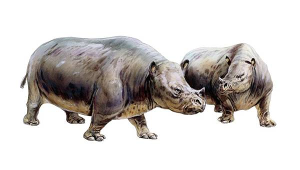 Ungulate Wall Art - Photograph - Palaeotherium by Michael Long/science Photo Library