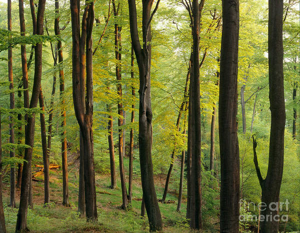 Photograph - Palatinate Forest In Germany by Dr Wolfgang Seeliger