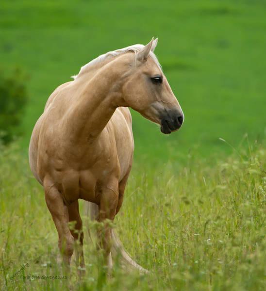 Pale Brown Horse Art Print