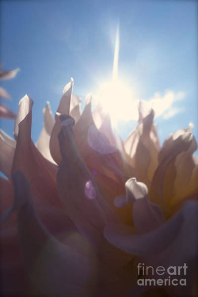 Photograph - Pale Petals In Pink #2 by Jacqueline Athmann