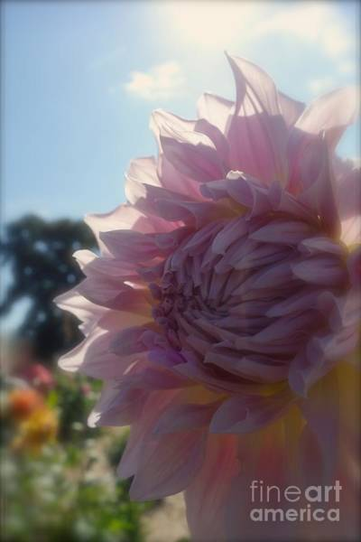 Photograph - Pale Petals In Pink #3 by Jacqueline Athmann