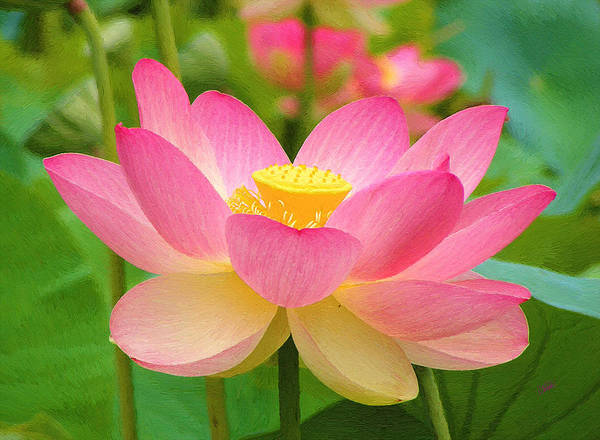 Painting - Pale Pink Lotus by Dean Wittle