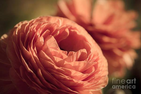 Photograph - Pale Pink Petals by Ana V Ramirez