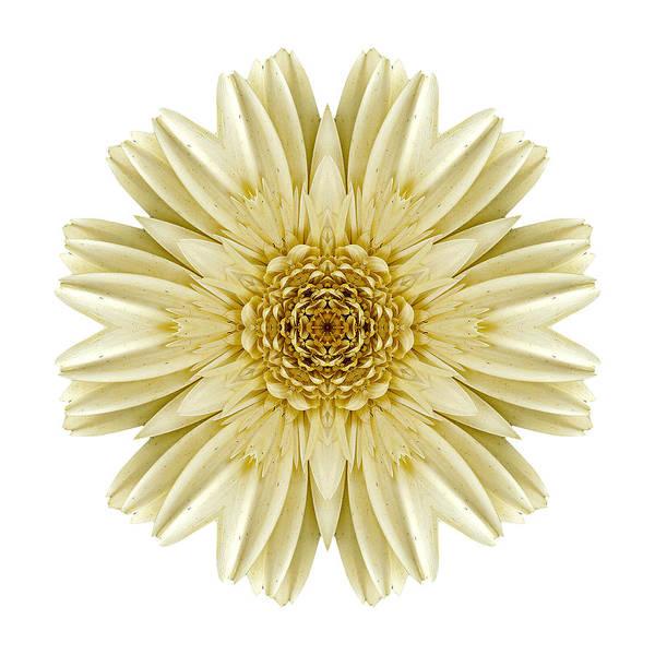 Photograph - Pale Yellow Gerbera Daisy IIi Flower Mandala White by David J Bookbinder