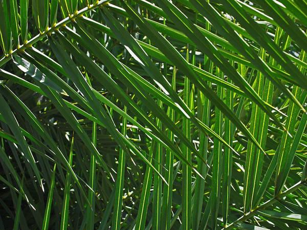 Photograph - Palm Crosshatch by Rona Black