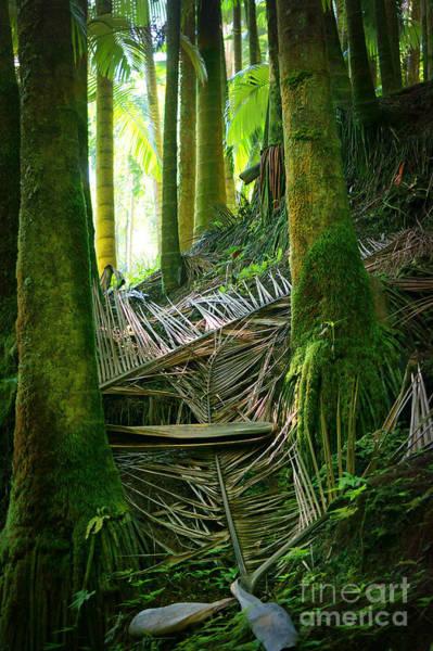 Photograph - Palm Forest by Ellen Cotton
