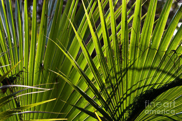 Photograph - Palm Fusion by Michelle Constantine