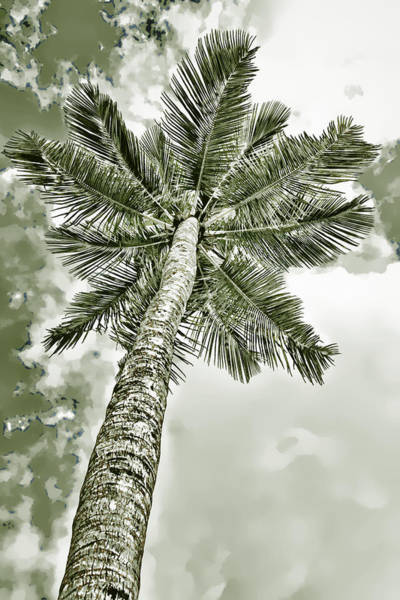 Photograph - Palm Green by Alice Gipson