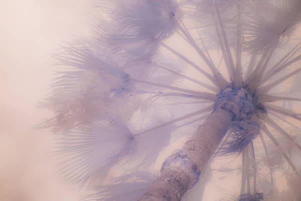 Palm Haze Art Print