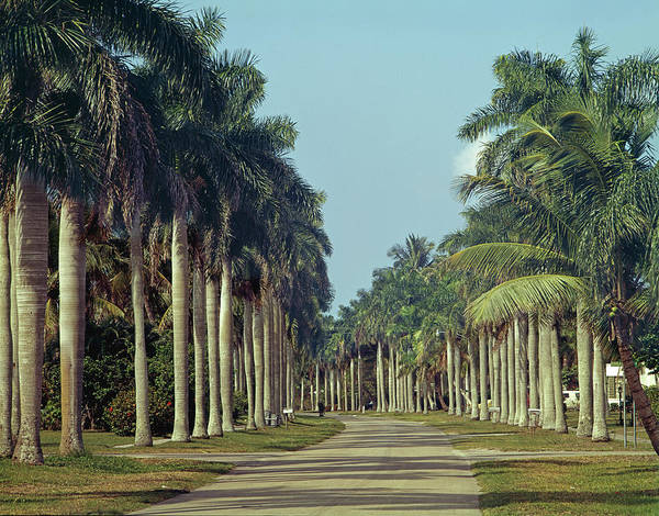 Photograph - 149710-palm Lined Street  by Ed  Cooper Photography