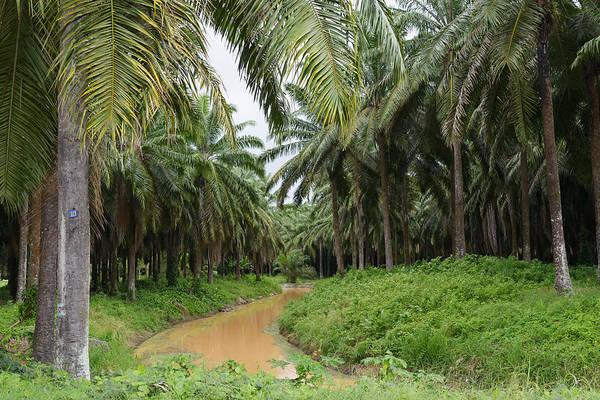 Wall Art - Photograph - Palm Oil Plantation by Martin Shields