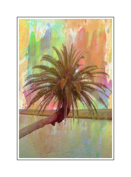 Photograph - Palm On The Loop by Alice Gipson