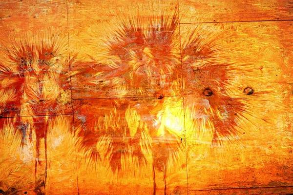 Photograph - Palm On Wood by Alice Gipson
