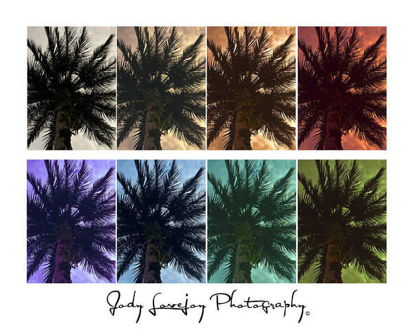 Photograph - Palm Shades by Jody Lovejoy