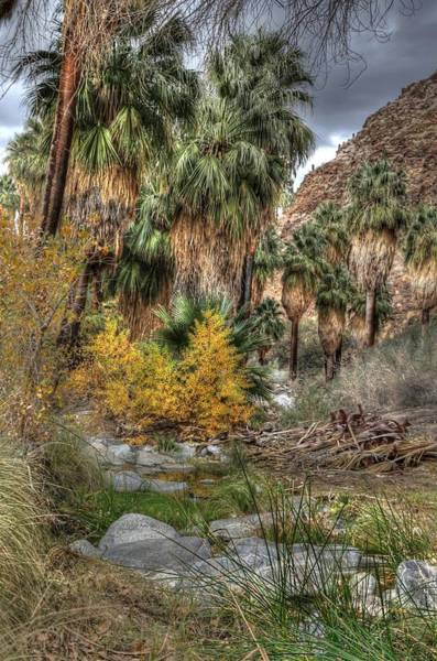 Photograph - Palm Springs Oasis In Hdr by Matthew Bamberg