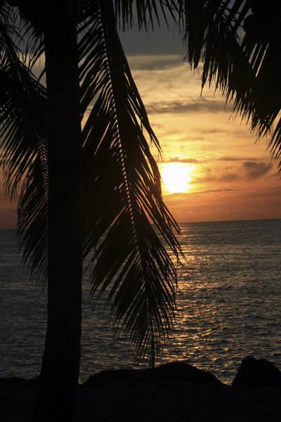 Photograph - Key West Palm Sunset by Bob Slitzan