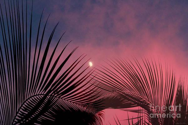 Photograph - Palm Sunset by Megan Dirsa-DuBois