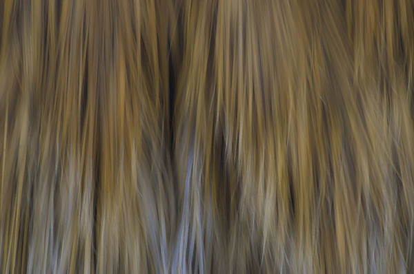 Photograph - Palm Tree Abstract 2 by Sherri Meyer