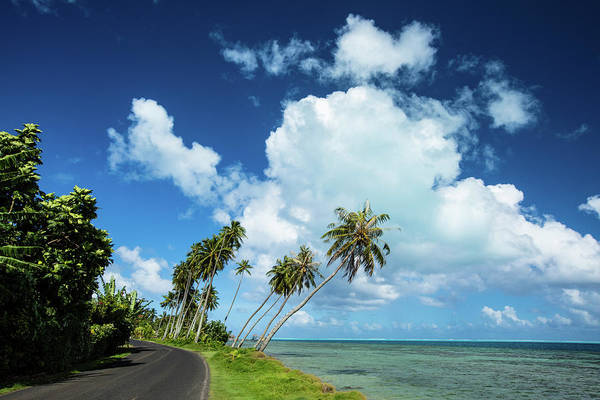 Island In The Sky Photograph - Palm Tree Along A Road by Panoramic Images
