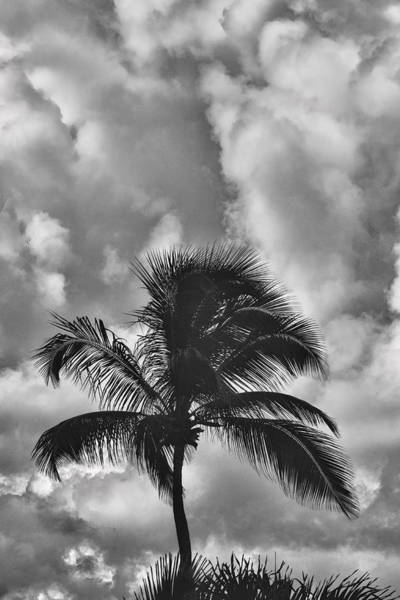Photograph - Palm Tree And Clouds by Gary Slawsky
