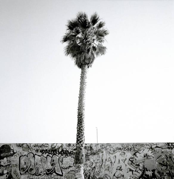 Photograph - Palm Tree And Graffiti by Shaun Higson