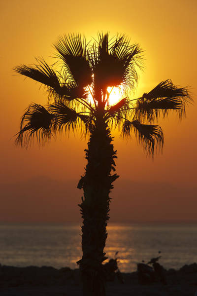 Photograph - Palm Tree At Sunset by Tony Mills