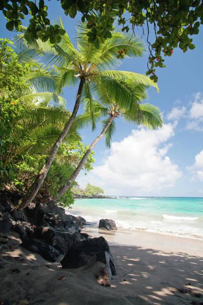 Maui Photograph - Palm Tree Beach by M Sweet