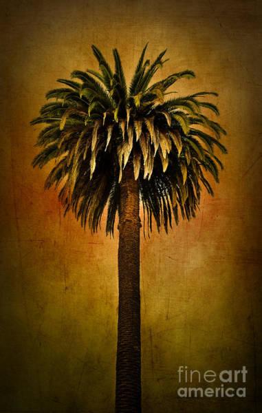 Wall Art - Photograph - Palm Tree by Elena Nosyreva