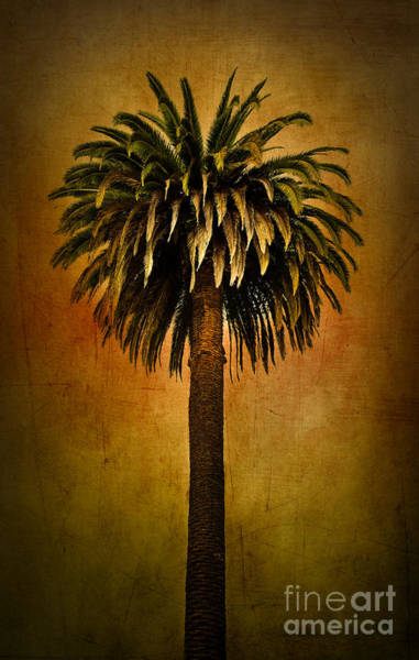 Photograph - Palm Tree by Elena Nosyreva