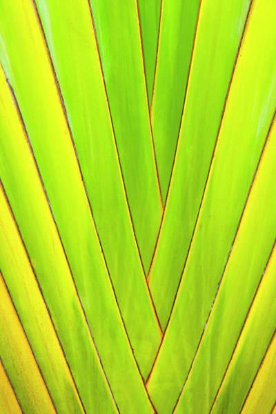 Honduras Wall Art - Photograph - Palm Tree, Honduras by Keren Su