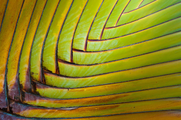 Photograph - Palm Tree Leafs by Sebastian Musial