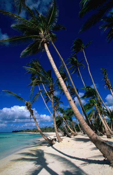 Dominican Republic Photograph - Palm Tree Lined Beach by Greg Johnston