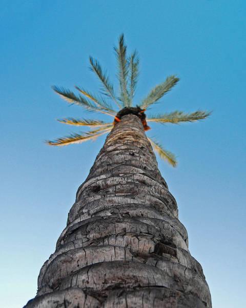 Palm Tree Looking Up Art Print